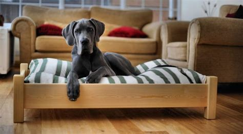 best dog bed for chewers best dog bed for chewers top products for the money review