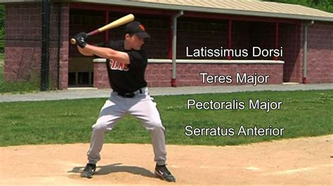 muscles used to swing a bat 10 12 learn baseball swing shoulder arm muscles improve