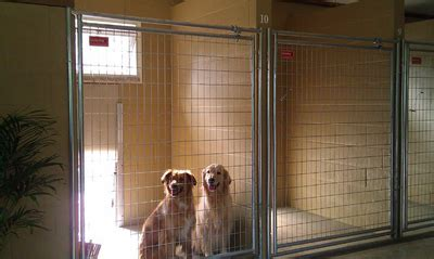 boarding rates rates doolin acres kennel