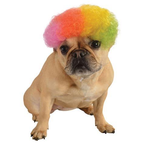 rainbow puppy rainbow afro wig costume baxterboo