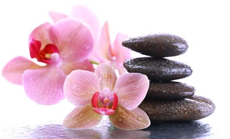 fiori day spa images spa orchid drops flowers stones closeup