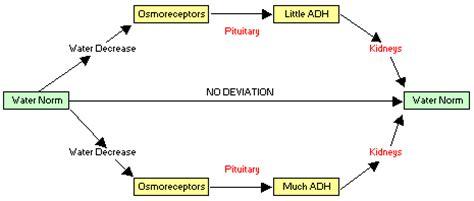 #112 osmoregulation | biology notes for a level