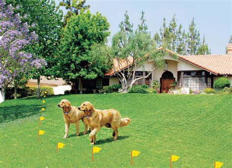 electric fences for dogs humane contain electronic fence world s best electric fences