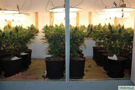 can you grow with a black light magnetic induction grow lights plasma grow lights do