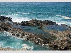 Tide pool - Wikipedia Rocky Intertidal Zones