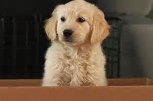 go commercial puppy godaddy pulls bowl ad after accusations of promoting puppy euthanasia billboard