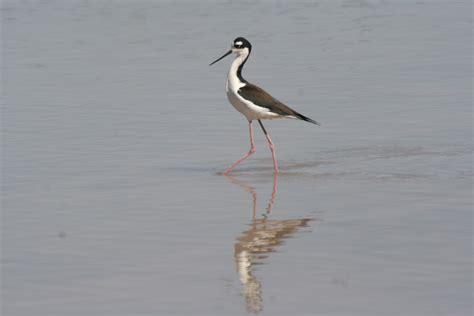 hologrambirds central arizona gilbert water ranch 26