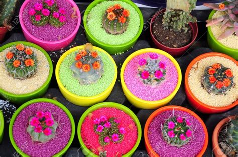 como decorar macetas de jardin macetas de colores para decorar tu jard 237 n jardines