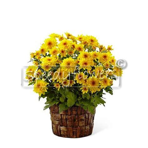 fiori per i morti fiori per defunti