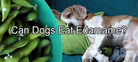 can dogs eat soybeans can dogs eat edamame pethority dogs