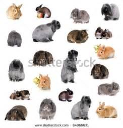 Raising Backyard Pigs Group Of Different Breeds Of Rabbits By Marina Jay Via