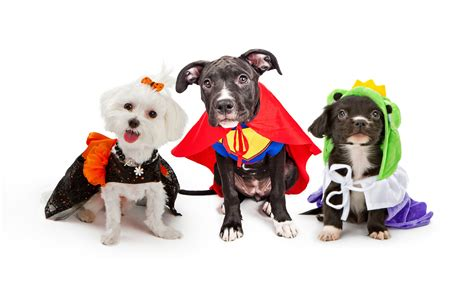 Pet Sweepstakes - 2015 halloween doggie daycare party and costume contest petropolis pet resort