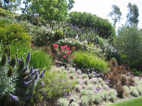 swaths of color on a slope looks like pride of madeira roses society garlic new zealand flax