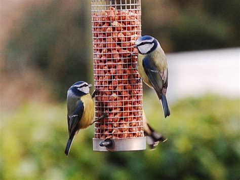 about us newbawn wild bird feed
