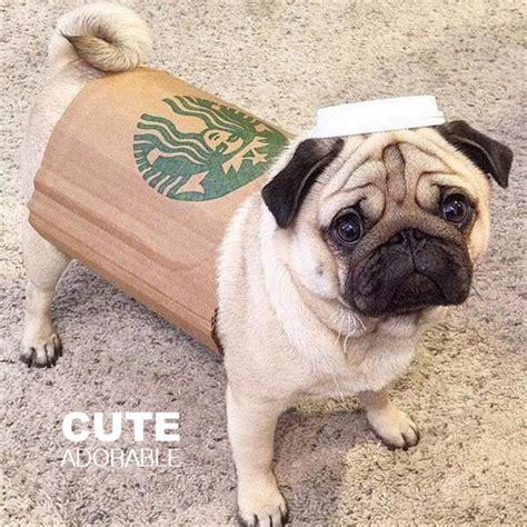 pug starbucks costume 5 costumes costume ideas