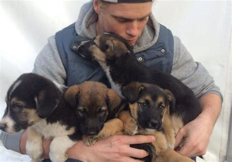 Ae Pulls Dogs Show For Foreseeable Future by U S Freestyle Skier Gus Kenworthy Adopting Stray Sochi