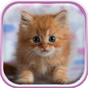 google images kittens cute kittens live wallpaper android apps on google play