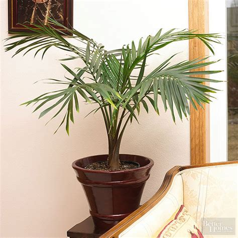 plants that thrive in low light houseplants that thrive in low light when you re out of