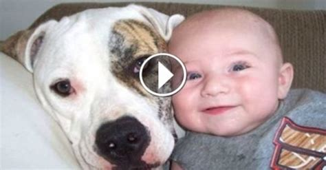 baby puppies and kittens cats and dogs with babies compilation from the coolest one