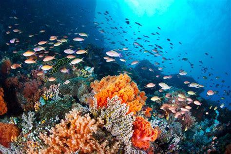 alor keindahan alam bawah laut yang berkelas dunia
