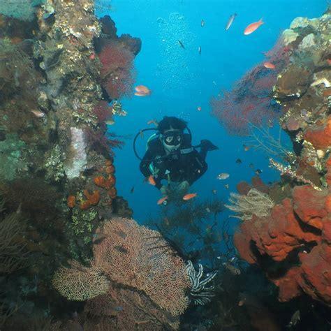 dive lombok 5 spot diving di lombok yang masih tersembunyi traveling yuk