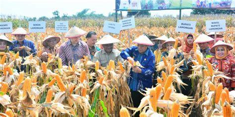 Benih Jagung Di Malaysia kementan siap penuhi benih hibrida jagung untuk petani di