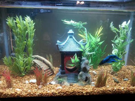 Betta Tank Decor Ideas by Betta Fish Aquarium Toys Aquarium Design Ideas