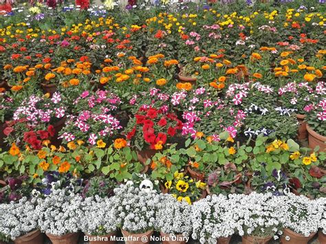 Flower Garden Show Flower And Garden Shows In Noida Delhi Ncr Archives Noida Chsbahrain