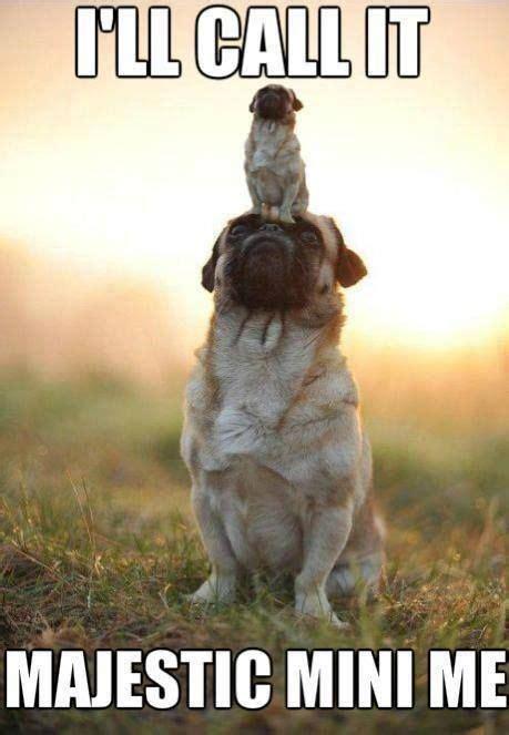 52 Best Images About Best Memes On Pinterest - best 25 puppy meme ideas on pinterest funny puppy memes