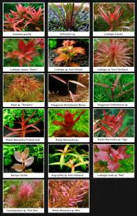 Aquascape Plants List aquarium plants aquarium aquariums and plants