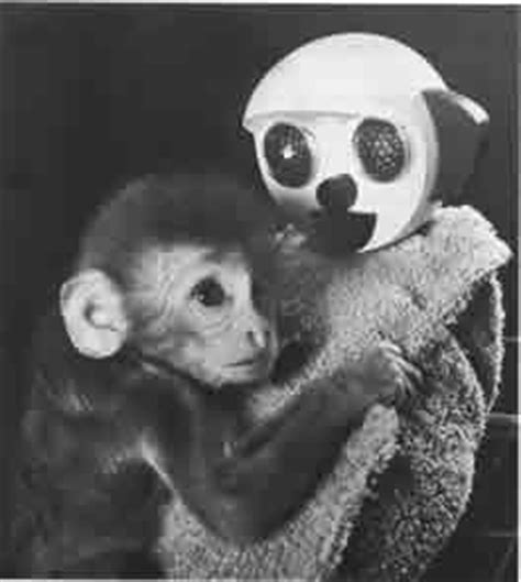 Harry Harlow Contact Comfort by Harlow S Monkey The Experiment Where Baby Monkeys Were