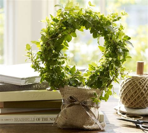 live ivy topiary traditional plants by pottery barn