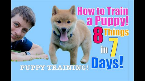 How To Teach Your To Stay The by How To Your Puppy 8 Things In 7 Days Stop Puppy