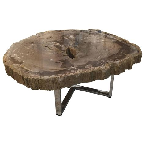Petrified Wood Coffee Table Large Modern Petrified Wood Coffee Table With Steel Base At 1stdibs