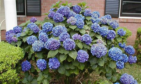 popular landscaping groundcovers and shrubs best landscaping plants and trees bistrodre porch and