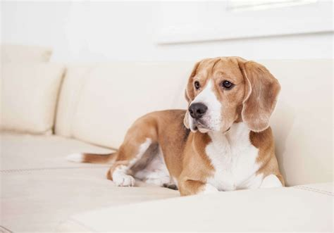 dog friendly couch home d 233 cor ideas for pet lovers mozaico blog