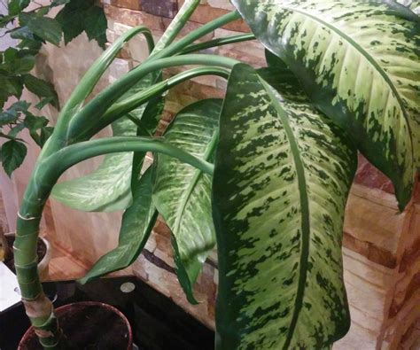 houseplants identify by leaves myideasbedroom com tall house plants low light in deluxe six houseplants find