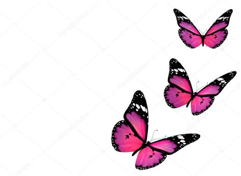 imagenes mariposas violetas tres mariposas violetas aisladas sobre fondo blanco