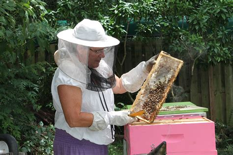 the backyard beekeeper the backyard beekeeper 28 images backyard beekeeping