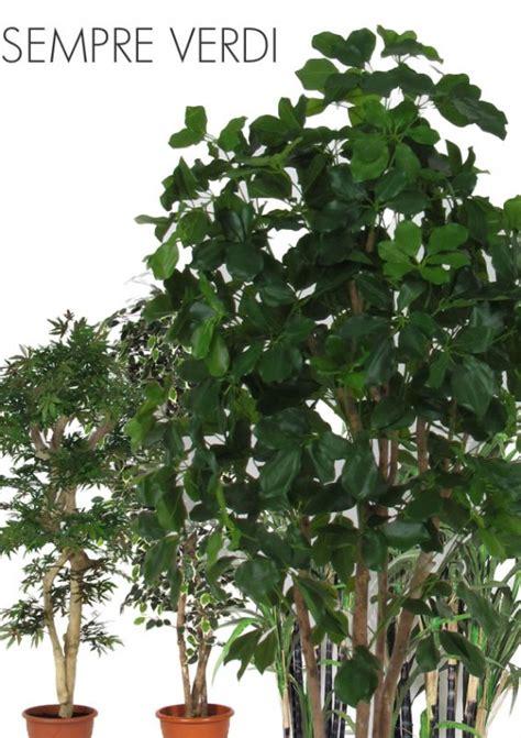 vaso fiori dwg vaso fiori dwg piante ricanti dwg disegni piante