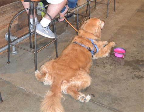 puppies fort collins friendly breweries in fort collins co tripswithpets