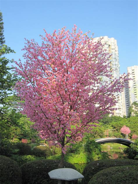 artificial cherry blossom trees garden decorative tree
