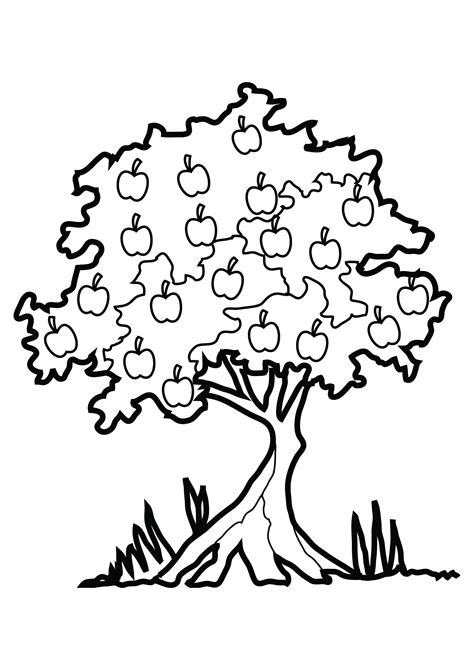 coloring page of a apple tree free printable tree coloring pages for