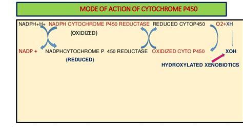 Cyanide Detox by Detoxification