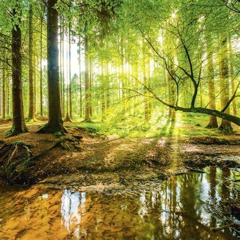artland glasbild wald mit bach landschaften fotografie