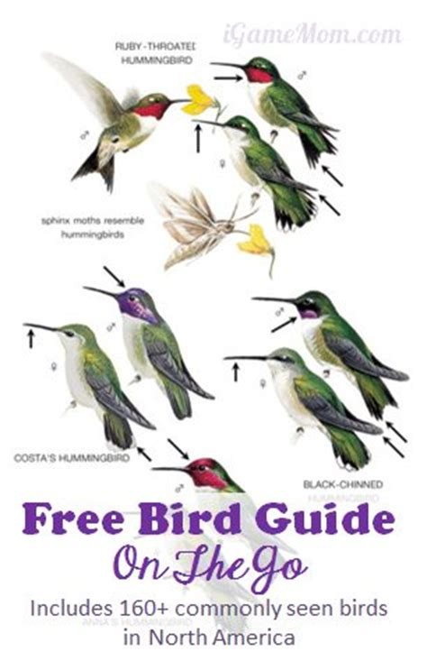 peterson feeder birds of america is the most