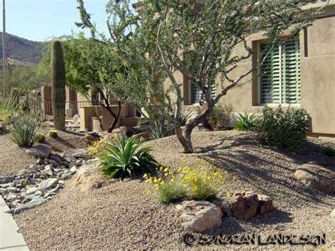 arizona desert landscaping design sonoran landesign