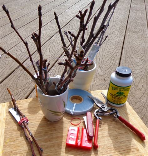 fruit tree grafting supplies growing greener in the pacific northwest fruit tree