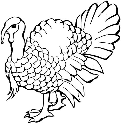 Coloring Pages Turkey free printable turkey coloring pages for