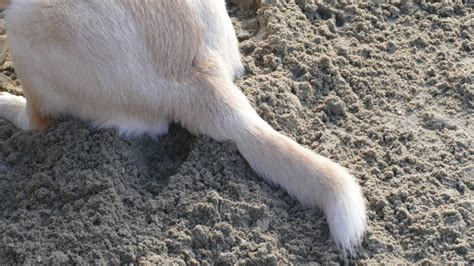 why do dogs their tails why do dogs their tails rover